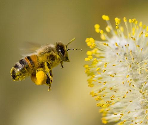 Biodiversité | Wattwiller